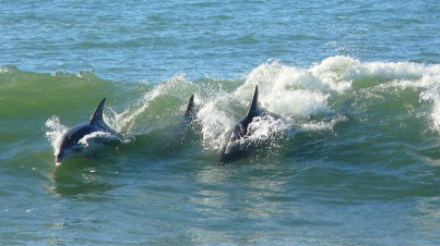Beach Music Beachfront Guesthouse Selfcatering Jeffreys Bay South Africa Dolphins